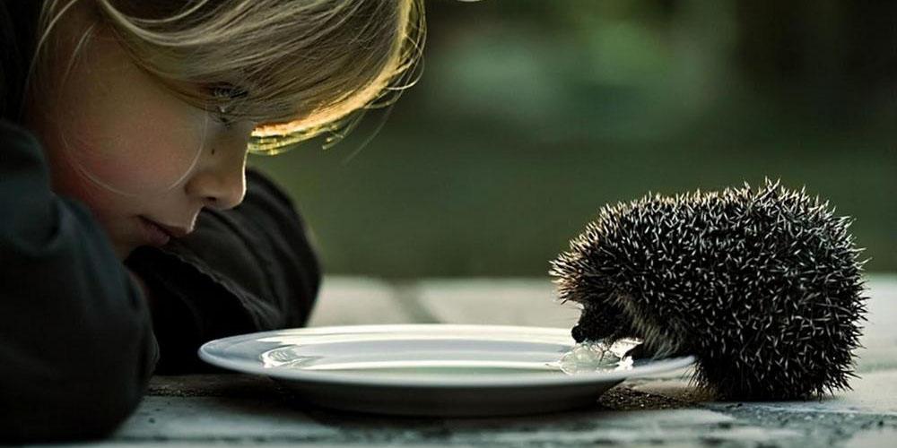 girl_feeds_the_hedgehog_maly_ladowe_jez_1280x800_hd-wallpaper-1204591